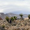 Red Rock Canyon, Las Vegas, Nevada. Photographs by Deborah Carney. Image #DSCN4391