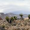 Red Rock Canyon, Las Vegas, Nevada. Photographs by Deborah Carney. Image #DSCN4391