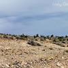 Red Rock Canyon, Las Vegas, Nevada. Photographs by Deborah Carney. Image #DSCN4394