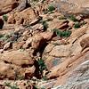 05-14-06-redrock-DSC06691