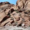 05-14-06-redrock-DSC06684