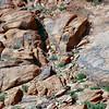 05-14-06-redrock-DSC06690
