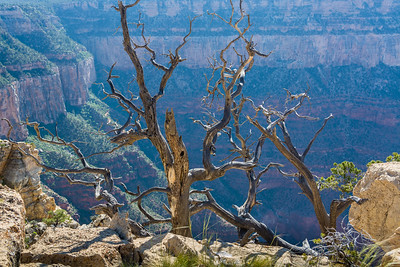Grand Canyon-5159