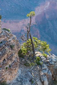 Grand Canyon-5176