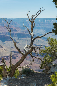 Grand Canyon-5325