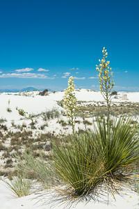 White Sands-6438