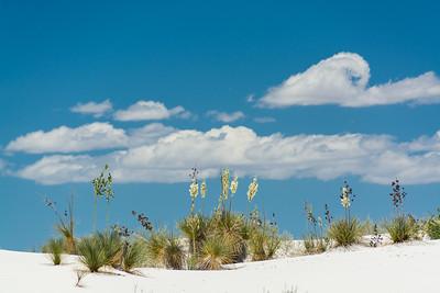 White Sands-6427