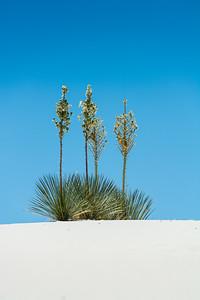 White Sands-6432