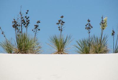 White Sands S5-1881