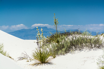 White Sands-6433