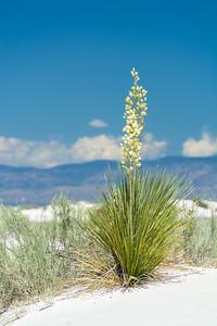White Sands-6436