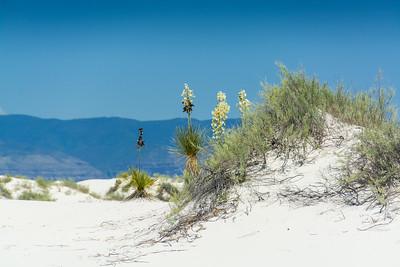 White Sands-6445