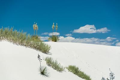 White Sands-6429