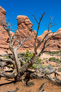 Double Arch_Arches National Park-4189