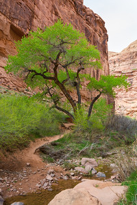 Hunter Canyon-4714