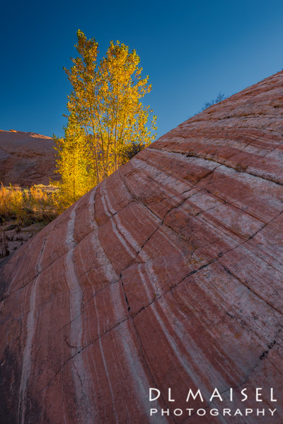 Autumn Color Near Escalante