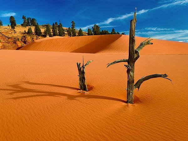 Coral Sand Dunes State Park, Utah.