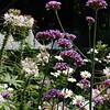 Flower Profusion