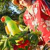 ParrotPrincess