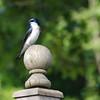 TreeSwallowSprite