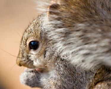 Same squirrel bit different angle.