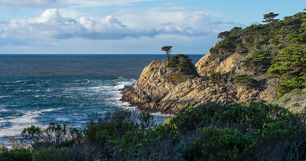 Lone Cypress, Point Lobos State Reserve, California, January 2017.