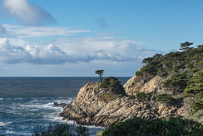 Lone Cypress part 2, Point Lobos State Reserve, California, January 2017.