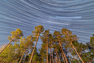 """Stars Through Southern Pines"""