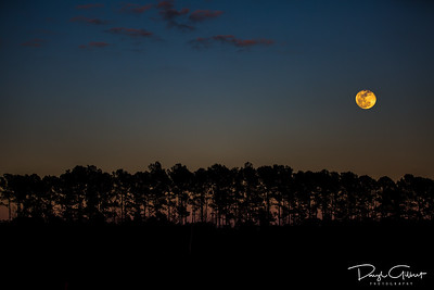 Wolf Moon Over Tally