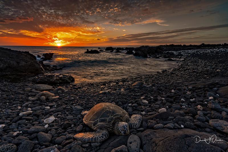 Turtle Sunset