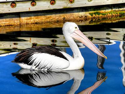 Pelican-Ramp