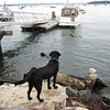 I really need to get Sailor to Maine to hang out with the boatyard crew.