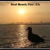 Sealbeach6 15