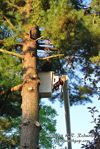 Hollis Works His Way Up the Tree Trunk