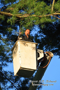 Hollis in the Treetop