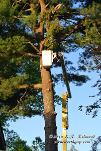 The Tree Service dropped this seventy foot white pine and had the debris cleared in one hour and twenty-five minutes.