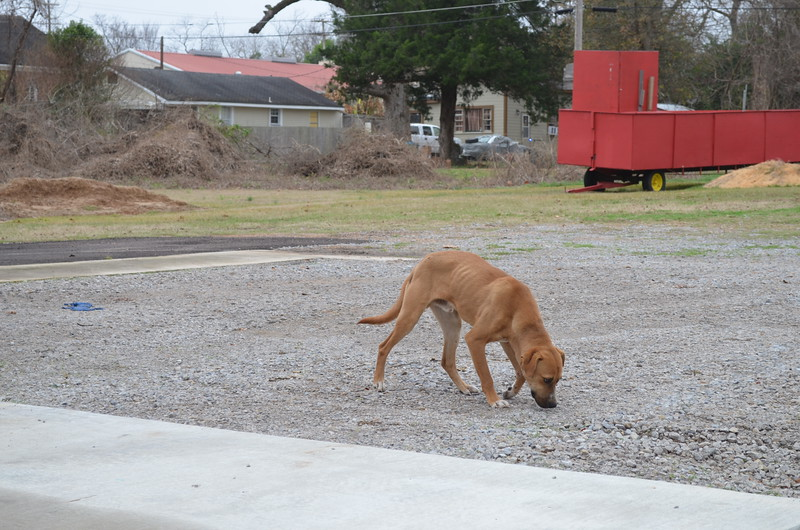 Stray doggie, Natchez, MS