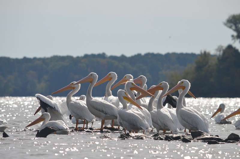 Crab Orchard lake <br /> Carbondale, IL
