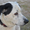 Rufus - Apalachicola