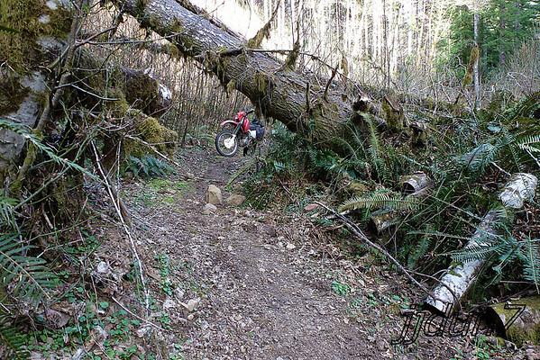 03-31-13 Beaver slide
