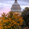 Autumn in DC