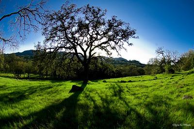 County Park, Sonoma CA
