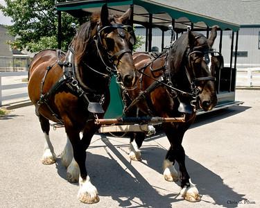 Lexington, Kentucky - Kentucky Horse Park