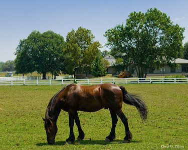 Lexington, Kentucky - Kentucky Horse Park