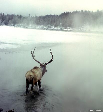 Yellowstone Montana