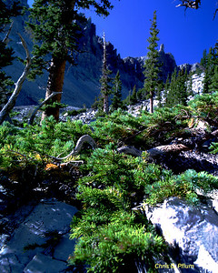 Glacier Trail, Great Basin National Park ,Nevada