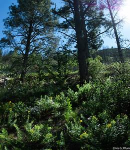 Bonito Creek, Capitan New Mexico