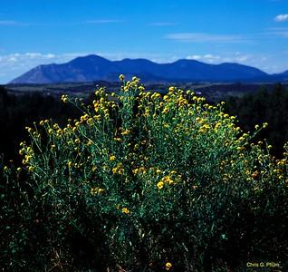 Capitan Mountains, New Mexico