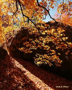 McKittrick Canyon ,Texas