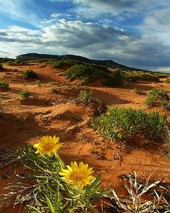 Coral Pink Sand Dunes  Utah